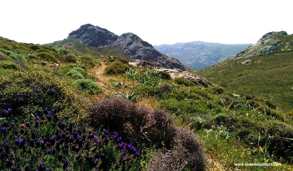 Randonnée à Serifos, descente de Giftika à Chora