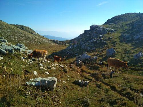 Circuit de randonnée Épire et Météores, promenade sur les hauteurs de Mont Timfi