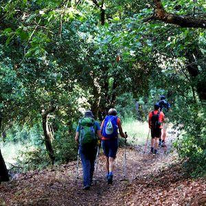 Chemin de randonnée ombragé à Corfou